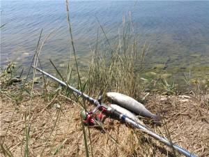 На что ловить кефаль в черном море