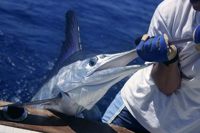 Рыбалка на марлина
