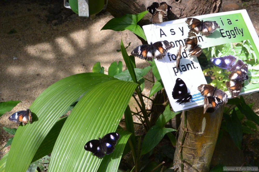 Butterfly sanctuary Кэрнс