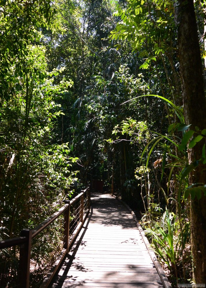 Прогулка по тропическому лесу