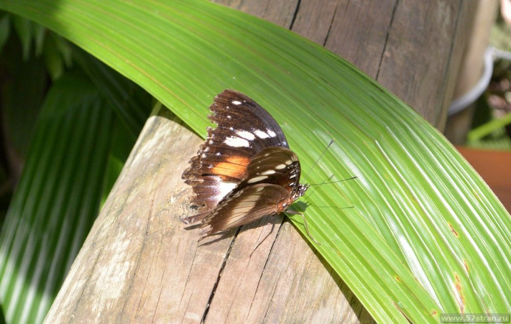 Бабочки в Кэрнсе