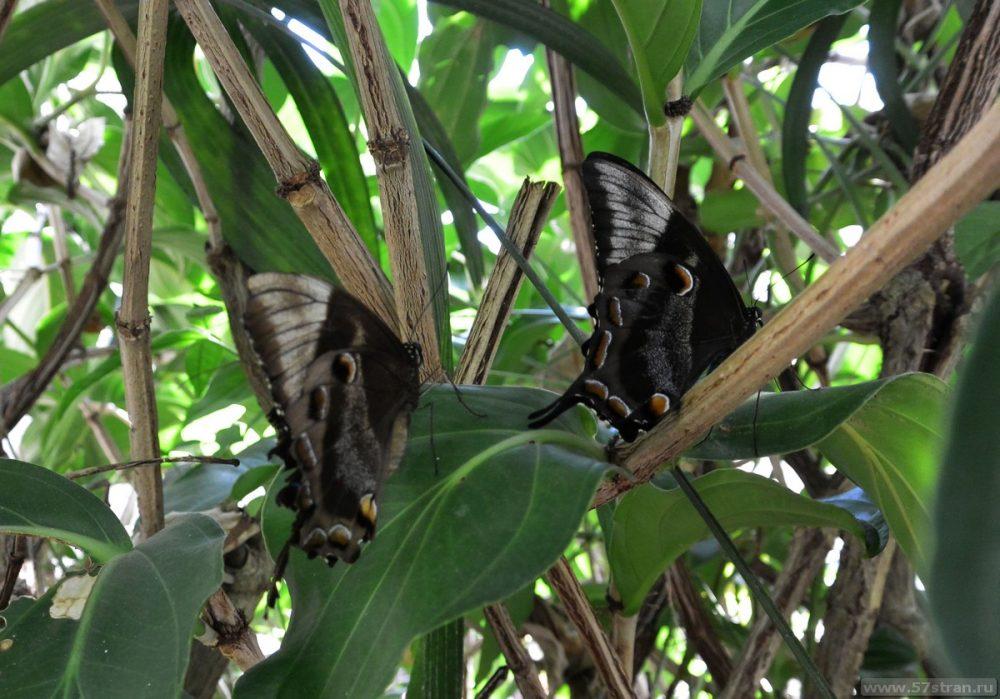 Бабочки в Куранде