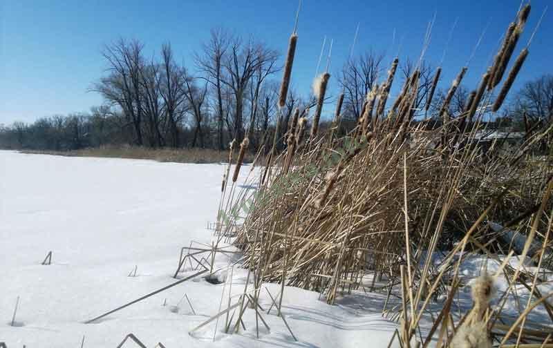 Перспективные места зимней ловли окуня на мормышку
