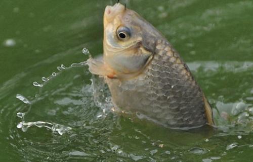 давление и рыбалка