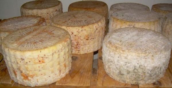 Сыр с червями на Сардинии