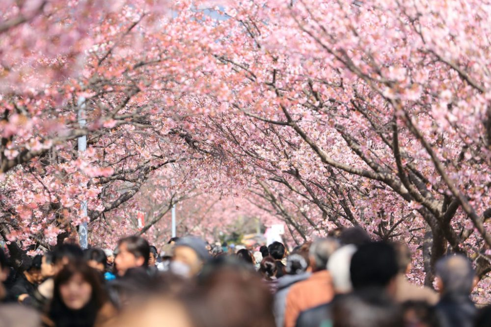Туризм Киото