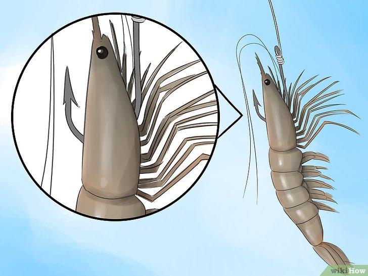 Изображение с названием Hook a Shrimp Step 1