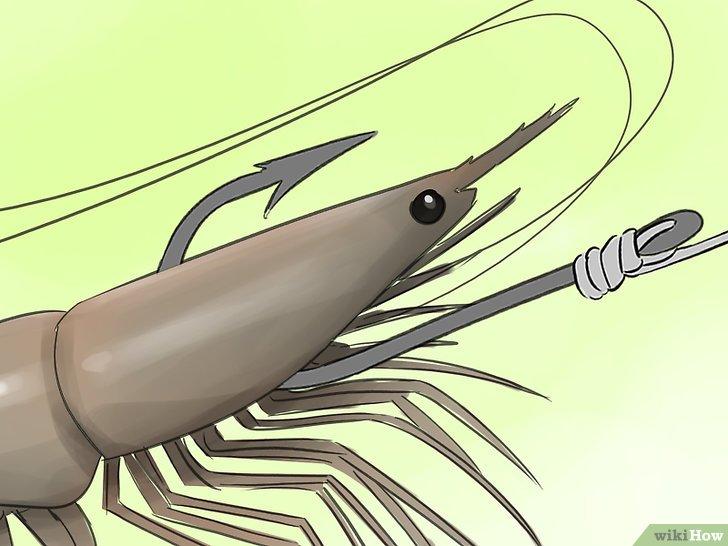 Изображение с названием Hook a Shrimp Step 2Bullet1