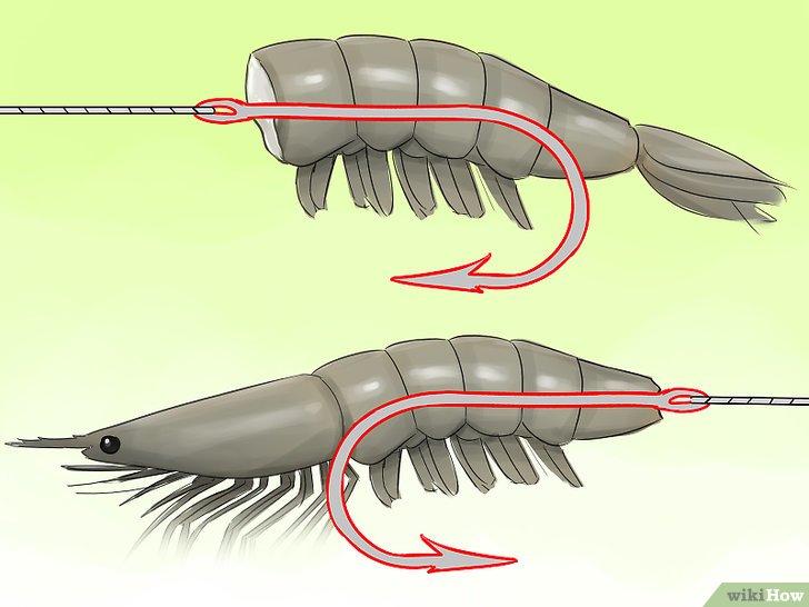 Изображение с названием Hook a Shrimp Step 6