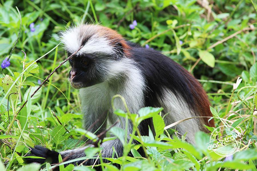 10 с половиной интересных фактов про остров Занзибар